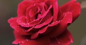 Festa delle Rose e delle Rite
